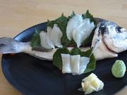 sashimi dorade sur Shiso